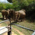 Ceylon Touristik and Travel - Private Day Tours Foto