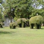 Potatura degli arbusti