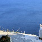 Kitty enjoying the view in Oia.