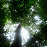 Explendor de la selva amazónica