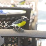 Join the bananaquits for breakfast at Bayside
