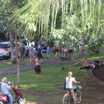 View of the fun action under the Banyon Tree.
