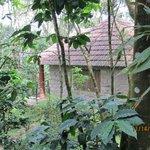 Photo de Indhrivanam