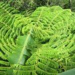 native flora and fauna