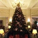 amazing christmas tree!!!
