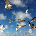 Pássaros na praia a 50 metros do Hotel Premiere