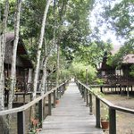 Boardwalks to the rooms/lodges