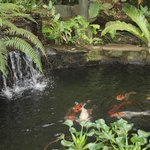 Koi Pond located beneath Neverland Treehouse