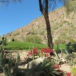 Cactus Garden and golf course by Camelback Mtn