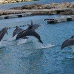 Delphinschwimmen