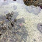 Local marine life