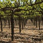 Endless views of beautiful vineyards