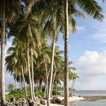 Пальмы на перешейке между островами