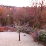 Frosty morning, view from apartment
