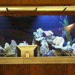 The Reception Aquarium..!