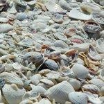The beach shells