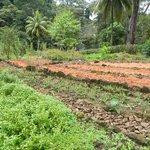 Heartsong Farm - Organic & Sustanable