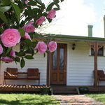 Gorgeous Apple Tree Cottage - surrounded by camelia and apple trees