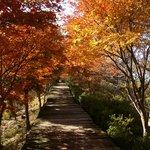 紅葉に囲まれた歩道