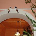Vlaštovky/swallows