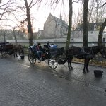 the horse carriages