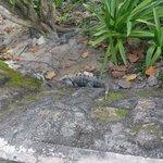 ruínas mayas no hotel