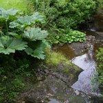 Beautiful natural gardens