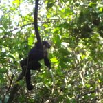 Monkey that hung out with us for a while.