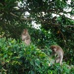 Monkeys watching us at dinner :)