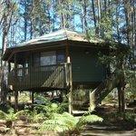 Cabin on stilts