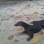 Local wild life - Sapi Island