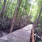 Jungle Trecking - Gaya Island