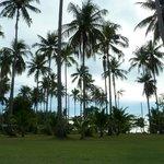 Снова пальмы
