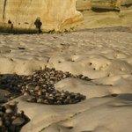 Морское дно на удаленном пляже во время отлива