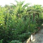 Вид с балкона на сад с лежаками