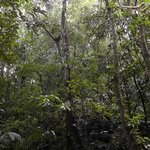 More trees in the jungle