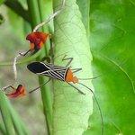 A really cool bug