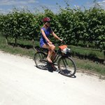 on yer bike vineyard tours a good option while staying here