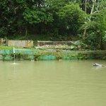 Amazonas-Delfin-Becken wie ein schmutziger Tümpel