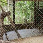 Katze wird wahnsinnig in Gefangenschaft