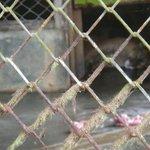 unglücklicher Puma, von denen es fast 10 gibt!
