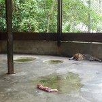trister Ozelot-Käfig