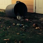 over turned trashcan that layed there for 7 days