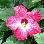 Flower in the front yard after rain