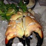 Scrumptious Florida Stone Crabs