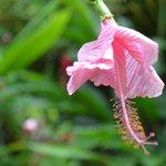 Flor del jardín