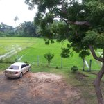 Overlooking paddy field.