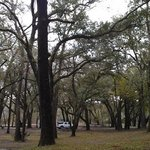 View of the gorgeous campground trees