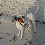 The friendliest beach bum