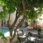 lemon tree near the pool